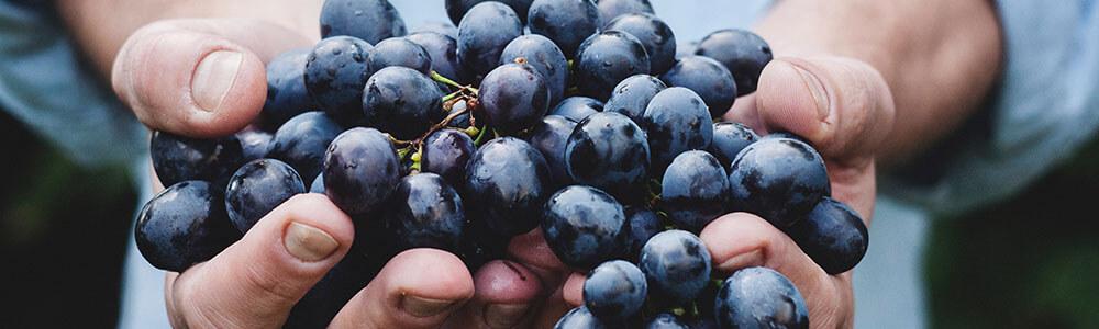 Weintrauben aus Spanien