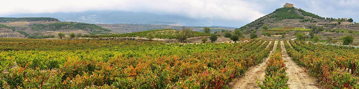 Weinberge Spanien