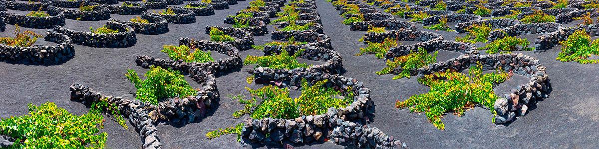 Weinanbau in Spanien Lanzarote